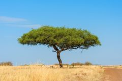 Landscape with nobody tree in Africa stock photography