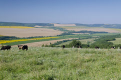 Beautiful landscape in northern Bulgaria Stock Photography