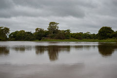 Beautiful landscape in northern Pantanal Royalty Free Stock Images