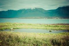 Beautiful landscape of Norway, Scandinavia Royalty Free Stock Photos