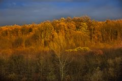 Beautiful landscape with oak forest royalty free stock images
