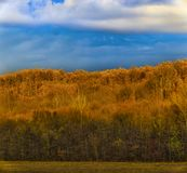 Beautiful landscape with oak forest stock photography