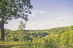 Beautiful landscape and oak i Dukstos, Lithuania Stock Photos