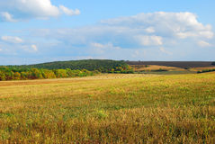 Beautiful landscape with an oblique field of wheat Stock Images