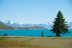 Beautiful Landscape Of Garden, Lake And Snow Mountain At Lake Tekapo, South Island, New Zealand Stock Images
