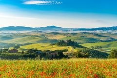 Beautiful Landscape Of Hilly Tuscany In Summer Sunny Morning Royalty Free Stock Photography