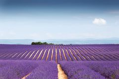 Beautiful Landscape Of Lavender Fields At Sunset With Dramatic Sky. Stock Image