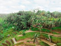 Free Beautiful Landscape Of Rice Fields In Bali Royalty Free Stock Images - 136094189
