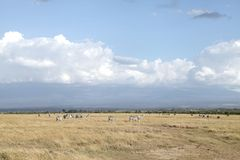 Beautiful landscape of Ol Pejeta Conservancy, Kenya Royalty Free Stock Images