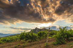 Beautiful landscape overlooking the vineyards Royalty Free Stock Photography