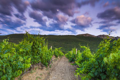 Beautiful landscape overlooking the vineyards and mountains Royalty Free Stock Images
