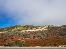 Beautiful landscape of pacific coastline, Big Sur. On Highway 1, CA, USA Royalty Free Stock Photo