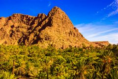Beautiful landscape of palm oasis close to Tinghir, Morocco, Africa. Beautiful landscape of palm oasis close to Tinghir, Morocco in Africa royalty free stock image