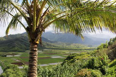 Beautiful landscape through the palm tree. Hanalei National Wildlife Refuge for waterbirds and beautiful landscape on Kauai Royalty Free Stock Photo
