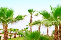 Beautiful Landscape with Palm Trees. Landscape of Palm Trees with Blue Sea Royalty Free Stock Photos