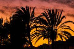 Beautiful landscape of palm trees against light at sunset royalty free stock photography