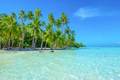 Palm trees on the beach. Travel and tourism concept. Tahaa, Raiatea, French Polynesia. royalty free stock image