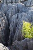 Great tsingy park in bekopaka in madagascar