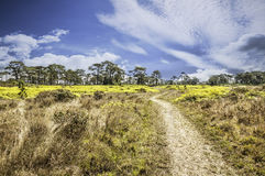 Beautiful  landscape Phu Kradung in thailand Royalty Free Stock Photos
