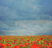 Beautiful landscape with poppies  against the sky with clouds Stock Images