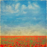 Beautiful landscape with poppies  against the sky with clouds , Royalty Free Stock Image