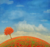 Beautiful landscape with poppies  against the sky with clouds Royalty Free Stock Photo