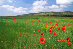 Beautiful landscape with poppies Royalty Free Stock Photos