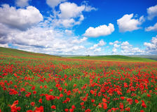 Beautiful Landscape with poppy meadow. Stock Images