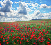 Beautiful Landscape with poppy meadow. Stock Image