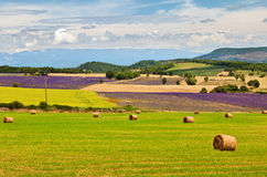 Beautiful landscape of Provence Royalty Free Stock Photos