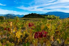 Vineyards in the provence in autumn stock photos