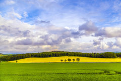 Beautiful landscape with rape field Royalty Free Stock Photos