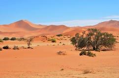 Sossusvlei, Namib Naukluft National Park, Namibia. Beautiful landscape with red dunes at sunrise, Sossusvlei, Namib Naukluft National Park, Namibia royalty free stock image