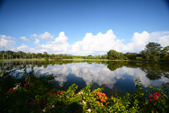 Beautiful landscape reflections of cloud and tree Royalty Free Stock Image