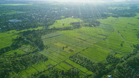 Beautiful landscape of rice field Stock Photography