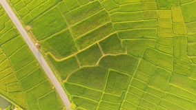 The beautiful landscape of rice fields royalty free stock images
