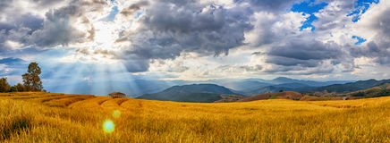 Beautiful landscape of rice terrace  view with sun flare Royalty Free Stock Images