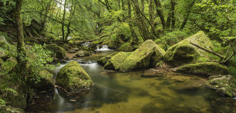 Beautiful landscape of river flowing through lush forest Golitha Royalty Free Stock Photos