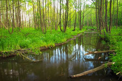 Beautiful landscape with a river in the forest. Fallen branches Royalty Free Stock Image