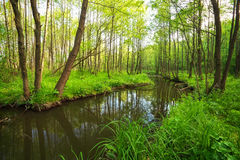 Beautiful landscape with a river in the forest. Royalty Free Stock Photography