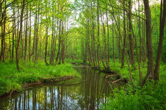 Beautiful landscape with a river in the forest. Stock Images