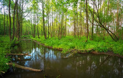 Beautiful landscape with a river in the forest. Royalty Free Stock Photos