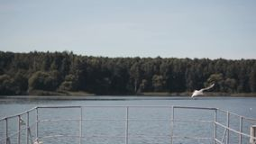 Beautiful landscape of river mooring and forest on the background. Seagulls flying near the water. stock footage