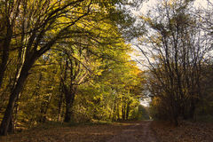 Forest Path Autumn Forest with Leafs Changing Color Stock Photo