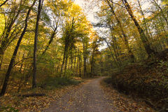 Forest Path Autumn Forest with Leafs Changing Color Royalty Free Stock Photo