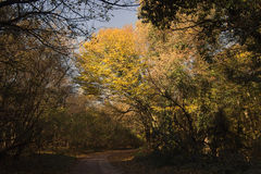Forest Path Autumn Forest with Leafs Changing Color Royalty Free Stock Photos