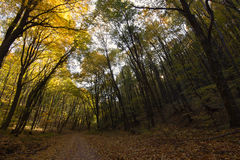 Forest Path Autumn Forest with Leafs Changing Color Stock Photography