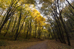 Forest Path Autumn Forest with Leafs Changing Color Stock Image