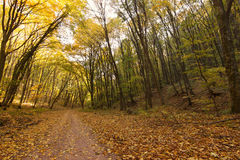Forest Path Autumn Forest with Leafs Changing Color Stock Photos