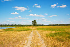 Beautiful landscape. Road to a lonely tree. In field Royalty Free Stock Images